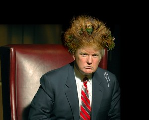 Trump hair